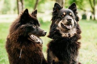Formosan Dog Names