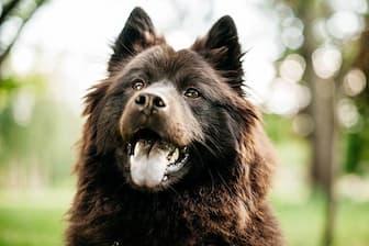 Girl Eurasier Names for Dogs