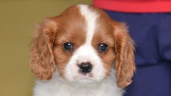 Great Britain Dog Names