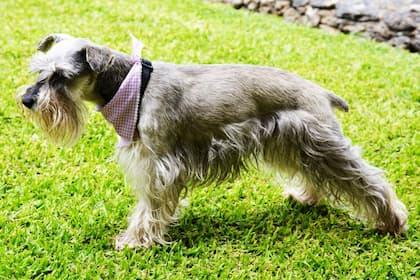 Male Cesky Terrier Names