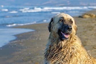Male Estrela Mountain Names for Dogs
