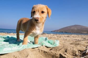 Ocean Dog Names for Male and Female Puppies