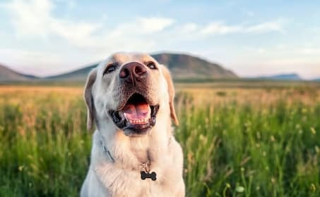 Top Female Yellow Lab Names