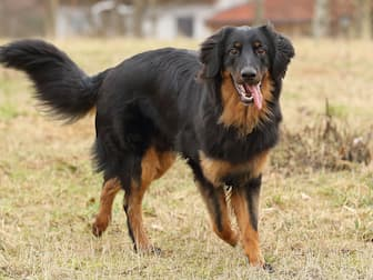 Exotic Hovawart Names for Dogs