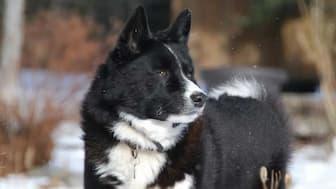 Female Karelian Bear Names for Dogs