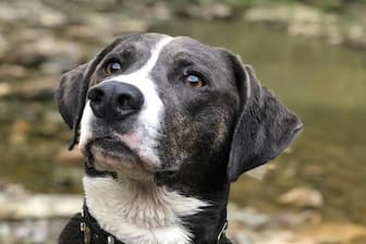 Female Mountain Cur Names for Dogs