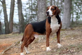 Hamiltonstovare dog names for Male and Female Puppies
