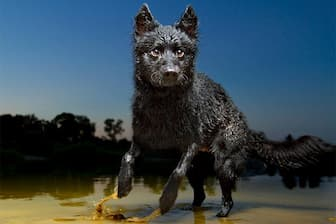 Top Names for Male and Female Mudi Dogs
