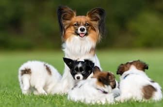 Toy Spaniels Dog Names
