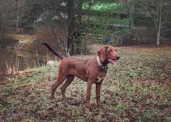 Badass Coonhound Names