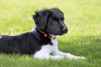 Female Names for Stabyhoun Dogs