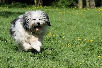 Female Polish Lowland Sheepdog Names