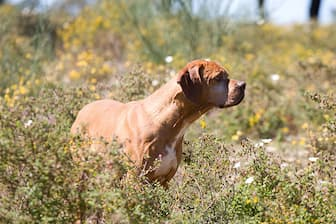 Female Portuguese Pointer Names for Dogs