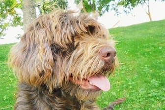 Female Portuguese Sheepdog Names for Dogs