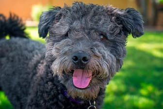 Female Pumi Names for Dogs