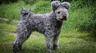 Lazlo Dog Names