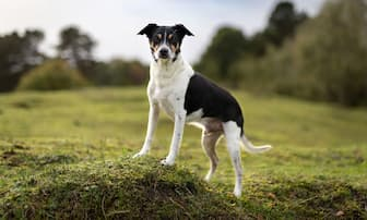 Rat Terrier Dog Names for Male and Female Puppies