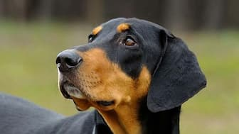 Unisex Names for Transylvanian Hound Dogs